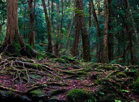 Aokigahara, la Foresta dei suicidi: luogo maledetto, tra fantasmi e demoni